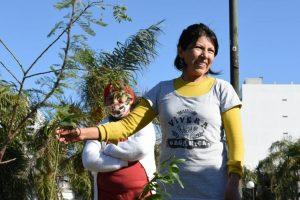 Plantacion Quinquela Martin (1)