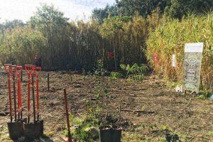 Plantacion Santa Catalina3