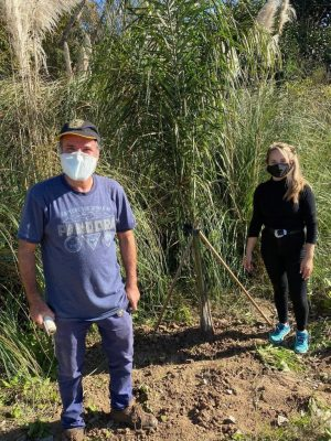 Plantacion en Tigre5